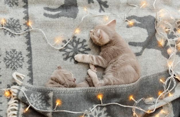 Kleine schattige katjes met kerstlicht