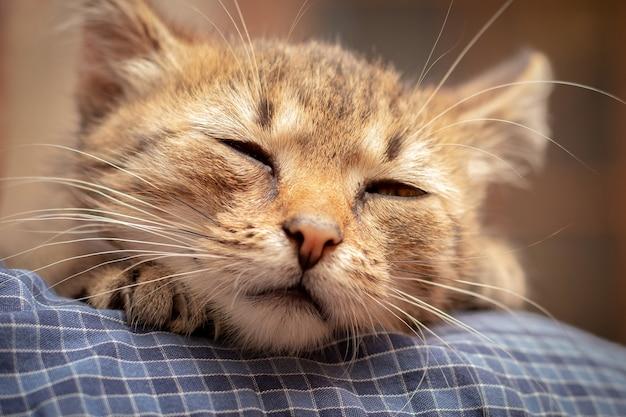 Kleine schattige kitten met gesloten ogen op de schouders van een man