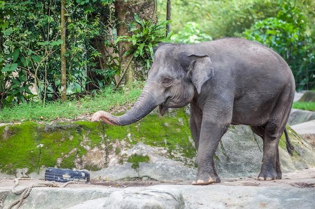 Kleine schattige olifant