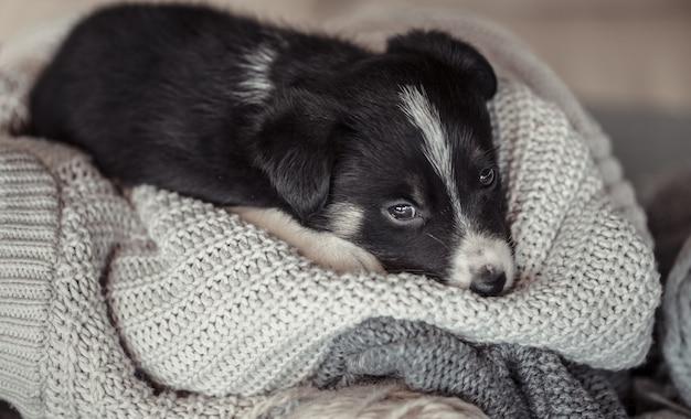 Kleine schattige puppy liggend met een trui