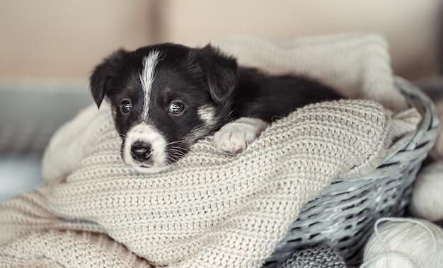 Kleine schattige puppy liggend met een trui.