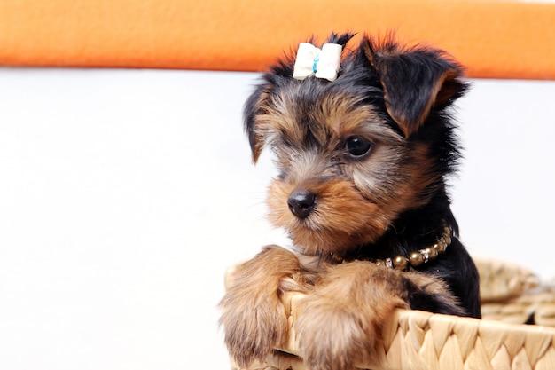 Kleine schattige puppy thuis