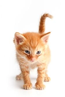 Kleine schattige rode kitten met blauwe ogen