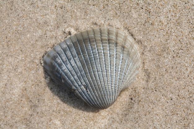 Kleine schelp op strandzand