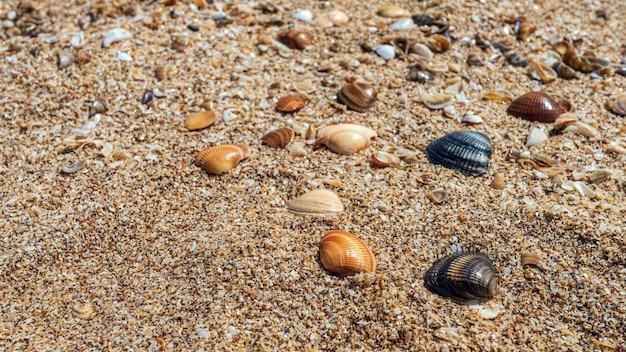 Kleine schelpen op de achtergrond van de oceaankust