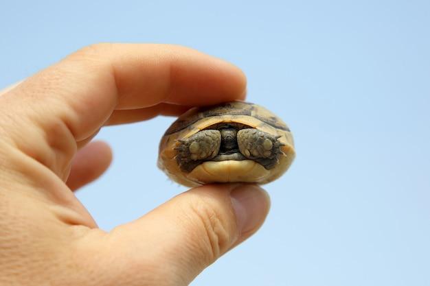 Kleine schildpad in de hand van een man