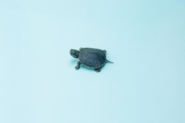 Kleine schildpad
