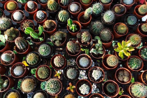 Kleine sierpotten met bloemencactussen. uitzicht van boven. decor met verse bloemen. home bloemen