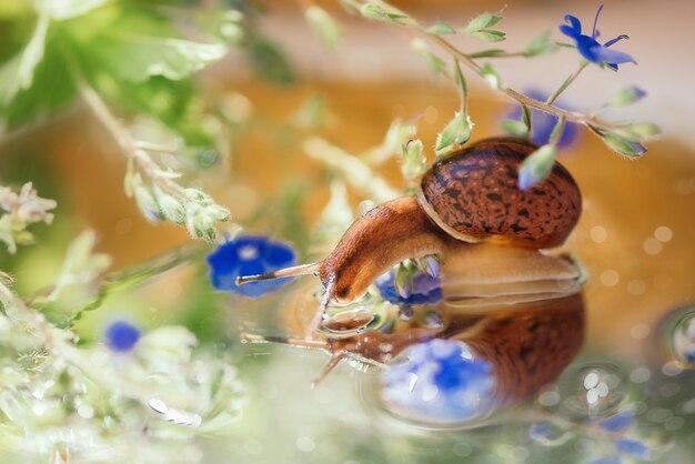 Kleine slak kijkt naar zijn spiegelbeeld in het water