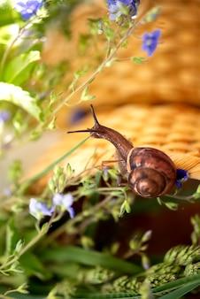 Kleine slak met grappige hoorns in de tuin