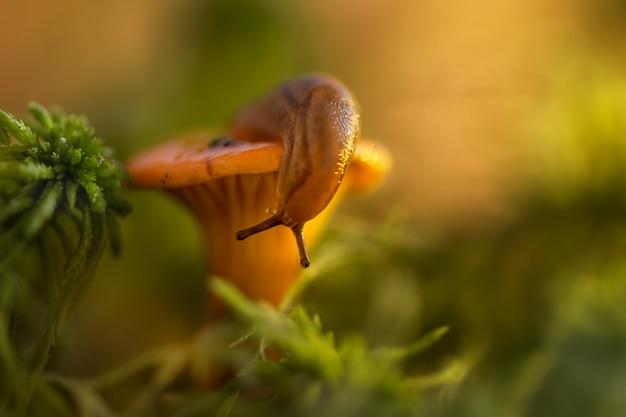 Kleine slak op de top van paddestoel