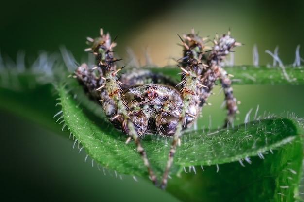 Kleine spin verborgen tussen de bladeren van een boom 0