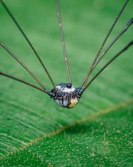 Kleine spinachtige zat op het blad van een plant