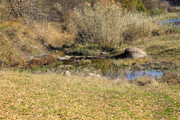 Kleine stroom in het bos in de herfst