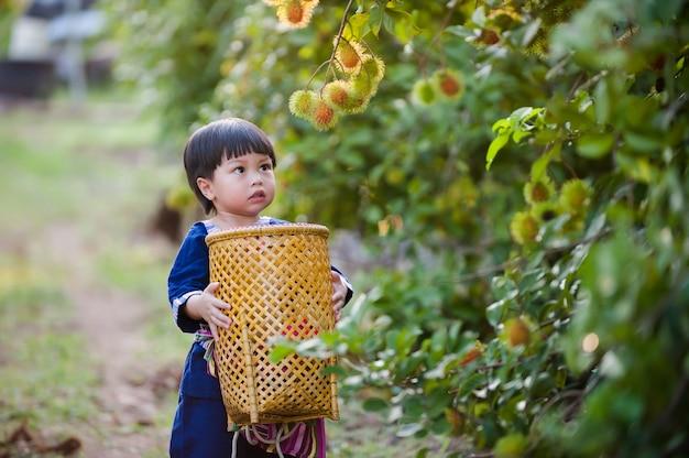 Kleine tuinman op biologische boerderij in het oogstseizoen, thailand, kind ramboetan fruit plukken op de boerderij