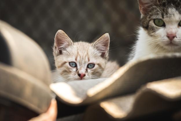 Kleine verdwaalde kat met moeder op autokerkhof close-up portret van dakloze dieren over de hele wereld