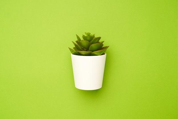 Kleine vetplant op een groene, minimale eenvoudige compositie