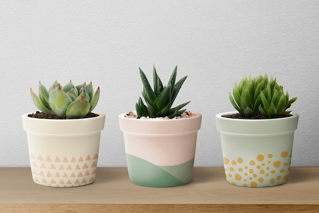 Kleine vetplanten in pastelpotten