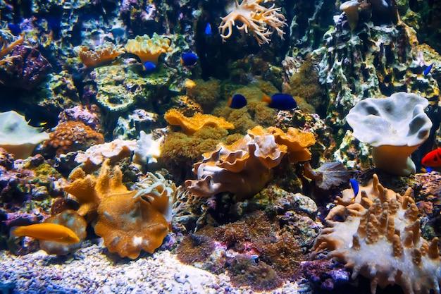 Kleine vissen zwemmen tussen koralen en metridiums en algen