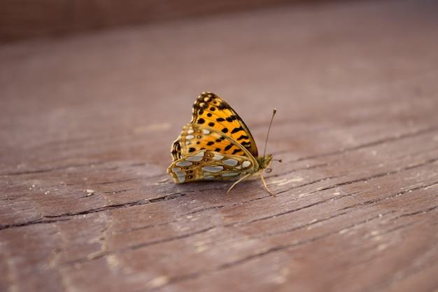 Kleine vlinderinsecten foto van een vlinder zittend op een boom