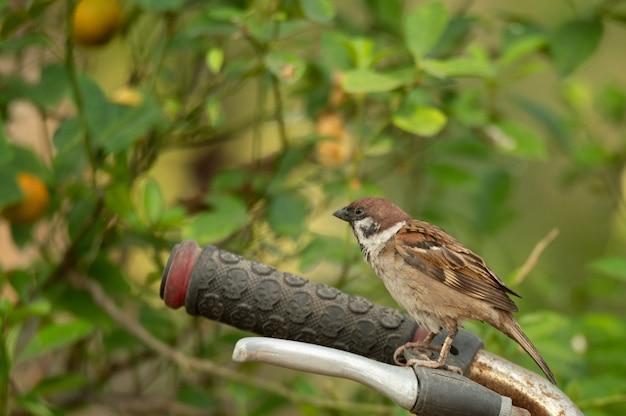 Kleine vogel die in de aard leeft