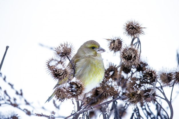Kleine vogel op een tak in de winter