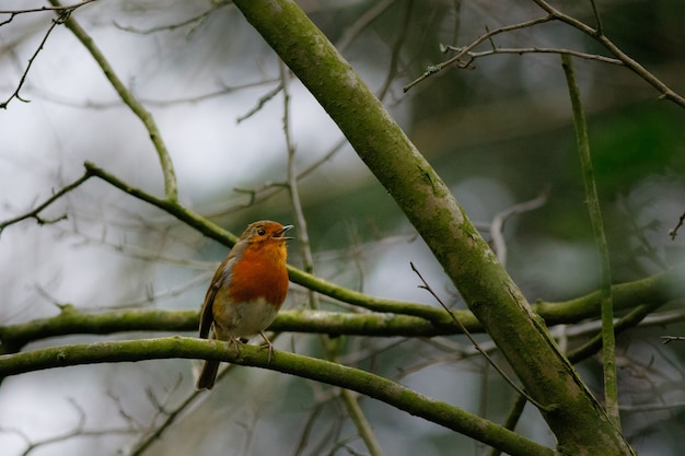 Kleine vogels zingen