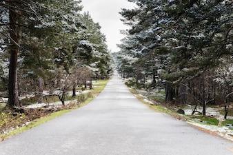 Kleine weg tussen besneeuwde bomen