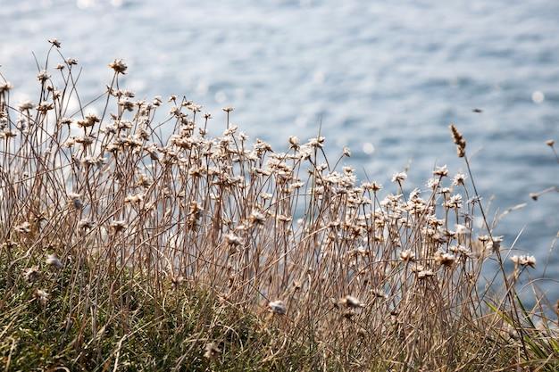 Kleine wilde bloemen aan zee