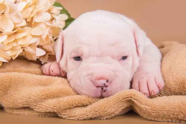 Kleine witte amerikaanse bulldog-puppyhond en bloemen