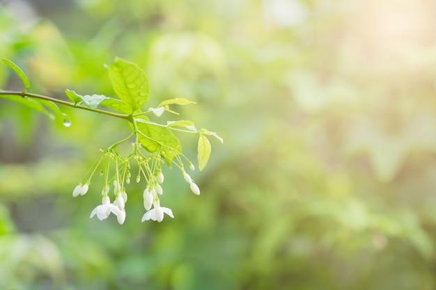 Kleine witte bloem en ochtendlicht