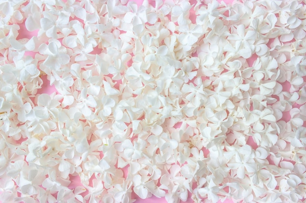 Kleine witte bloemen op een roze achtergrond.