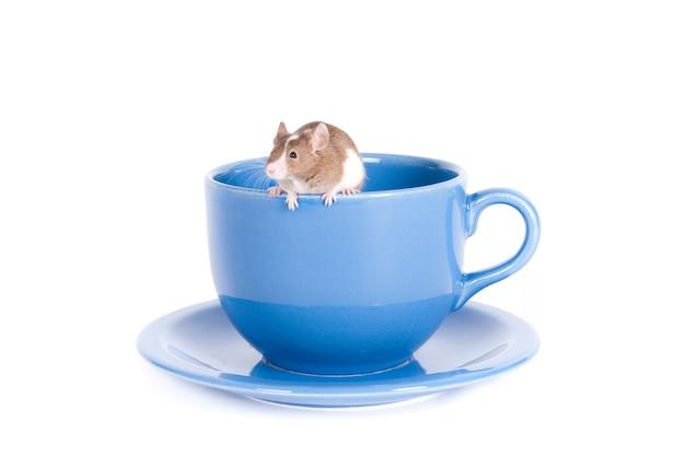 Kleine witte en bruine muis die op de rand van een blauw theekopje op een wit oppervlak klimt