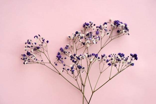 Kleine witte gypsophila bloemen op een roze achtergrond, ruimte voor tekst, minimalisme