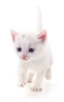 Kleine witte kitten geïsoleerd