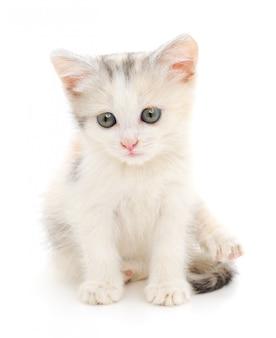 Kleine witte kitten op een wit