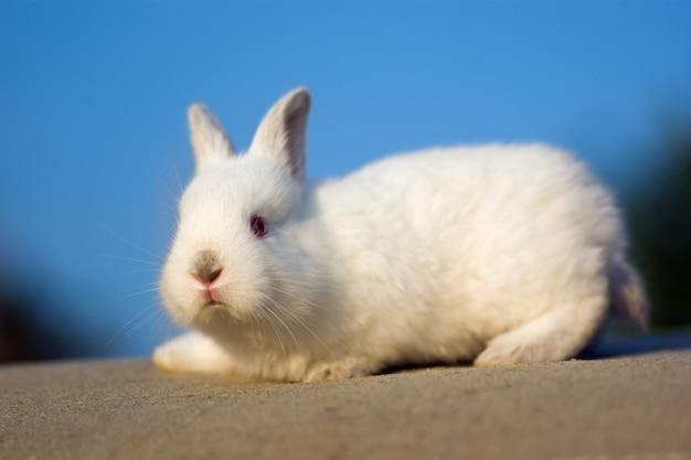 Kleine witte konijn op de hemelachtergrond