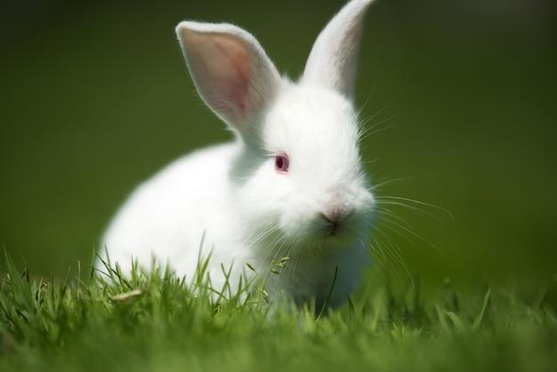 Kleine witte konijn op groen gras in zomerdag