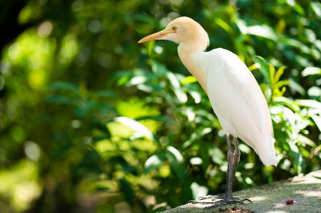 Kleine witte reiger met een gele kop in een groen park. vogels kijken