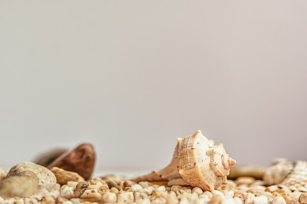 Kleine zeeschelp op de natuurlijke muur van de zandzomer