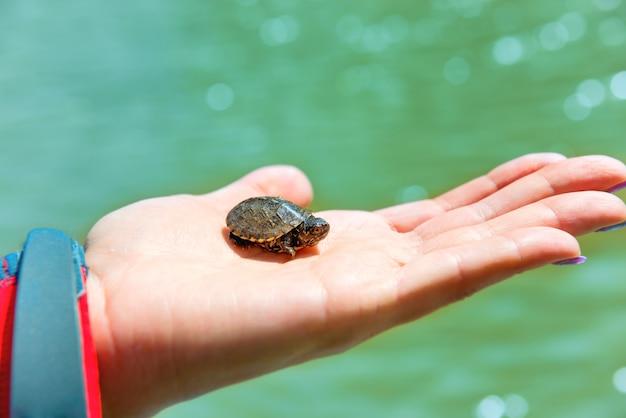Kleine zeeschildpad die op de hand van de vrouw kruipt met blauwe waterachtergrond
