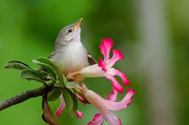 Kleine zingende vogel zat op bloem