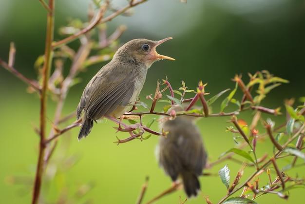 Kleine zingende vogels op boomtak