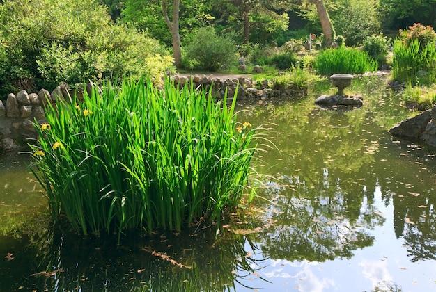 Kleine zomervijver met reflecties op het wateroppervlak