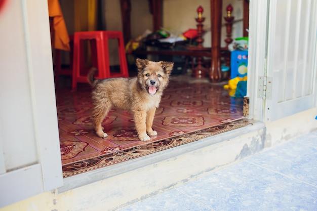 Kleine zwarte dakloze pup op straat