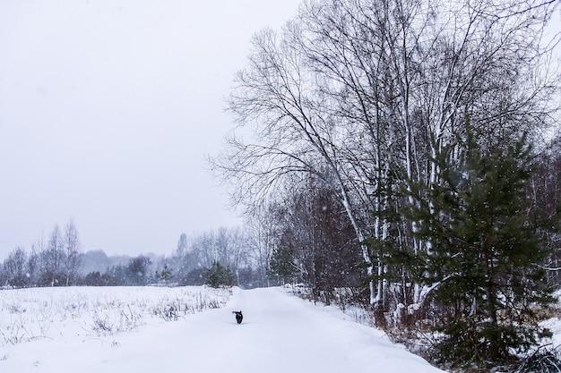Kleine zwarte hond loopt langs de weg in het dorp in de winterdag.