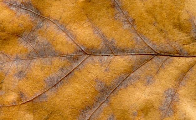Kleur boom blad macrotextuur. abstracte herfst blad achtergrond