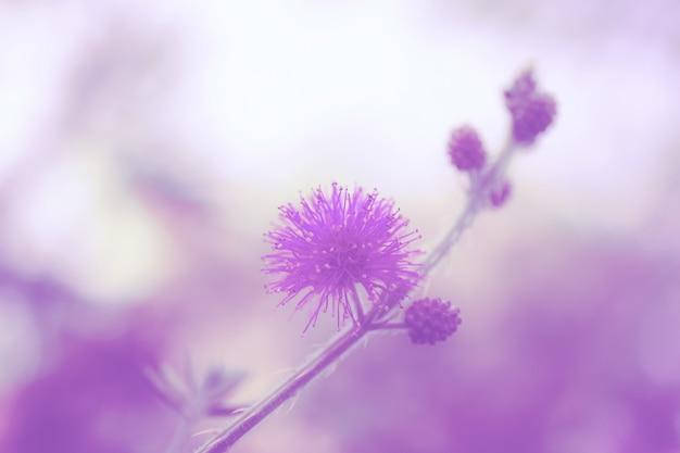 Kleur van bloemen bij zonlicht.