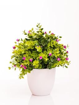 Kleurenbloemen in witte pot die op wit wordt geïsoleerd