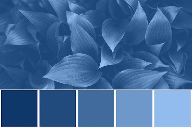 Kleurenpalet met natuurlijke texturen, bladeren geïnspireerd op trendy blauwe kleur van het jaar 2020. tropische bladachtergrond. mode concept